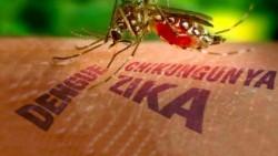Dấu hiệu và phương pháp phòng tránh virus ZIKA